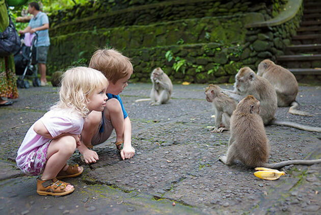 Monkey Forest Sanctuary - indonesia luxury tour packages