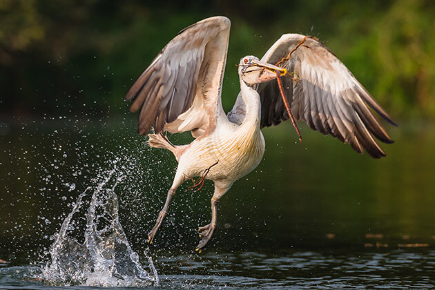 Prek Toal Bird Reserve