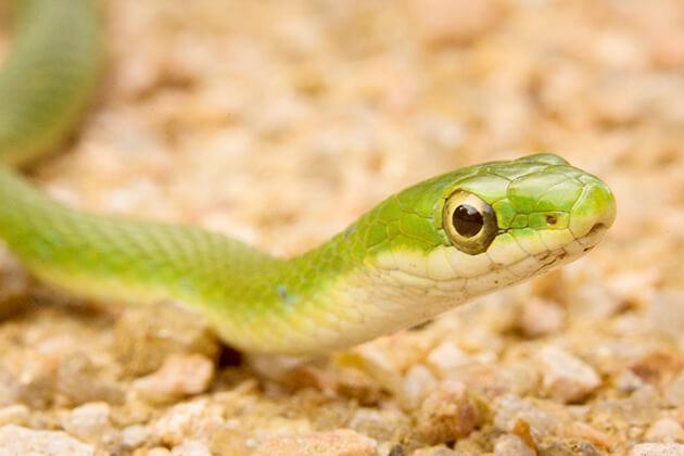snake - vietnamese zodiac animals